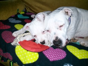 Gracie and Ty resting