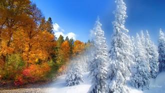 fall-into-winter