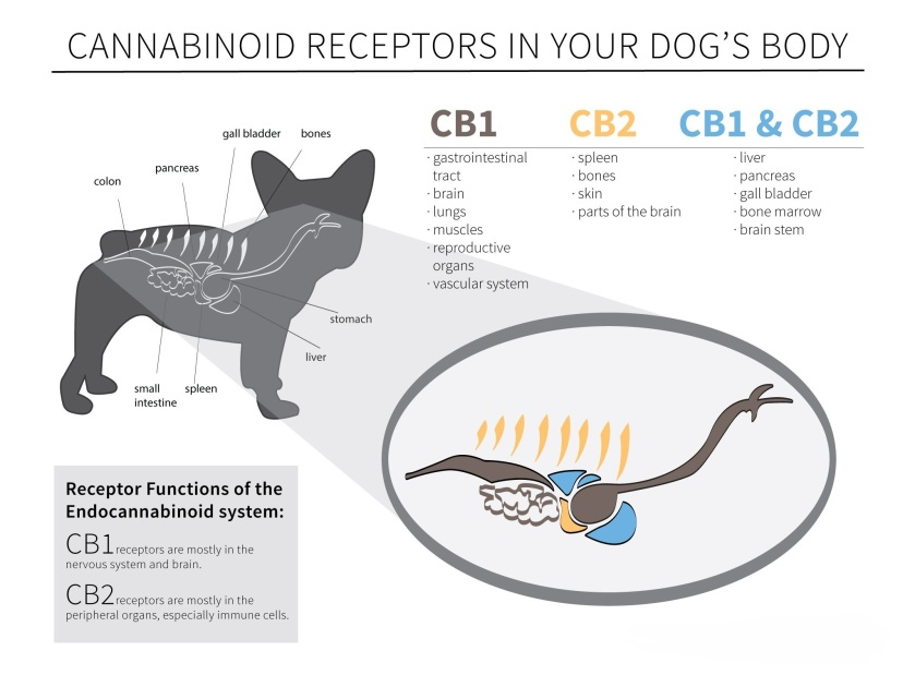 CB Receptors in your dogs body
